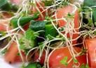 激ウマ!スプラウトとトマトの簡単サラダ