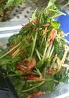 ナンプラーでキメる☆桜海老と豆苗のサラダ