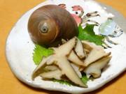 ツメタガイの刺身の写真
