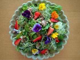 食べる綺麗エディフルフラワーサラダ