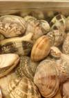 ニョロ!潮干狩☆アサリの砂抜き処理&保存