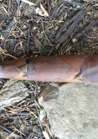 手早く破竹の皮をむく方法