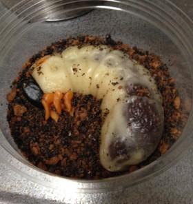 和菓子細工☆カブトムシの幼虫