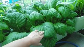 小松菜やほうれん草など葉物の保存方法