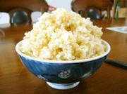 玄米の炊き方(普通の鍋で今すぐ炊ける!)の写真