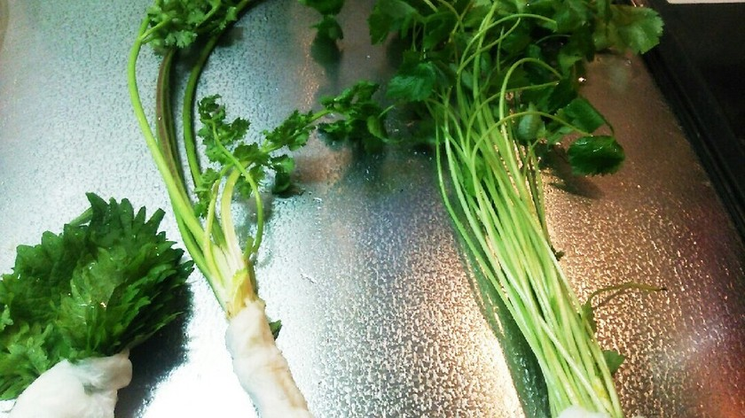 野菜の保存(葉菜類)大葉、三つ葉、香菜