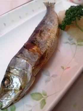 鰯は弱い魚なんかじゃないよ!