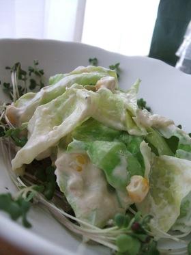 ✿春きゃべつのツナクリームチーズサラダ