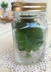 メイソンジャー‼️大葉の保存にピッタリ