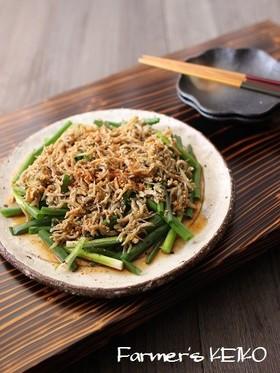 【農家のレシピ】ねぎとしらすのサラダ