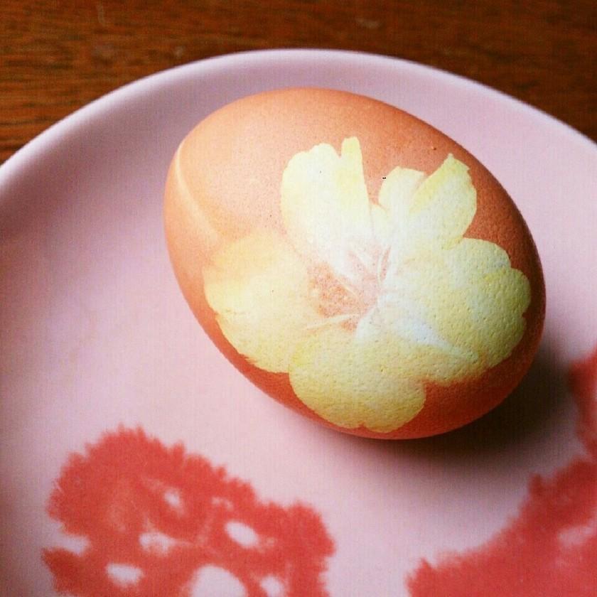 桜の花のゆで卵