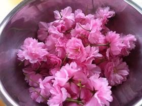 桜の花で♡簡単桜の塩漬け