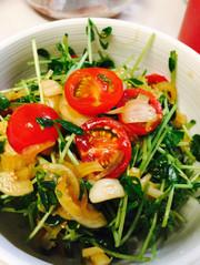 トマトと豆苗のシャキシャキサラダの写真