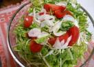 葉野菜まるごとグリーンサラダ