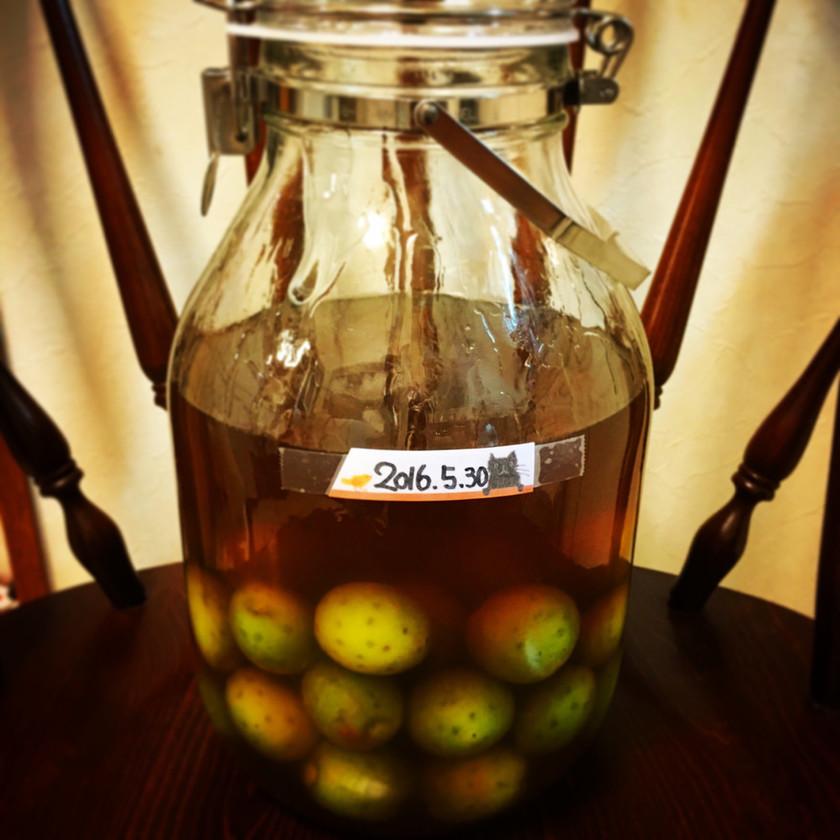 梅酒好き直伝(・ω・)蜂蜜ブランデー梅酒