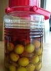 完熟梅のフルーティーなブランデー梅酒