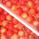 さくらんぼの保存☆美味しい食べ方と洗い方