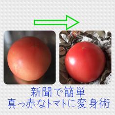 色の悪いトマトを真っ赤なトマトにする方法