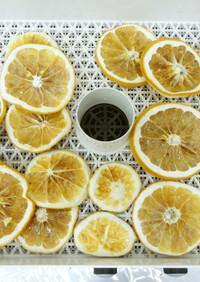 食品乾燥機でドライグレープフルーツ作り