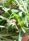 超簡単♪サラミと水菜のシーザー風サラダ☺