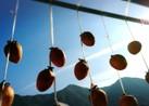 寒~い冬を楽しむ♪簡単干し柿の作り方