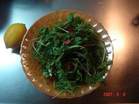 超簡単!ルッコラのシンプルサラダ