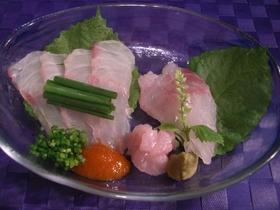 魚を捌こう!赤ハタの刺身・薄造り編