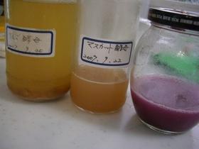果物から育てる自家製酵母液~中種まで♪