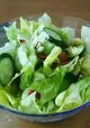 春☆レタスときゅうりのサラダ