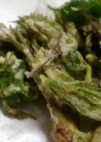 タラの芽、ウワバミ草、コウモリ草の天ぷら