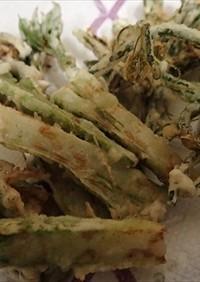 タラの芽、タチシオデの天ぷら