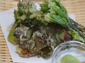 山菜・山ぶどうタラの芽コシアブラの天ぷら