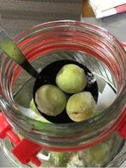 梅シロップ(青梅、南高梅、三温糖)の写真