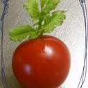 あれっ?プチトマトに芽が出た・・