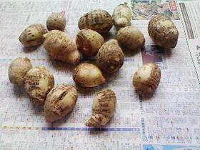 里芋、八つ頭の皮のむき方