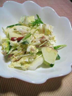 しゃきしゃき 白菜&りんごのサラダ