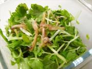 セロリとさきいかのサラダの写真