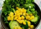 胡瓜とコーンのサラダ