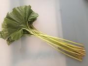 【野菜ソムリエ】ふきの下茹での写真