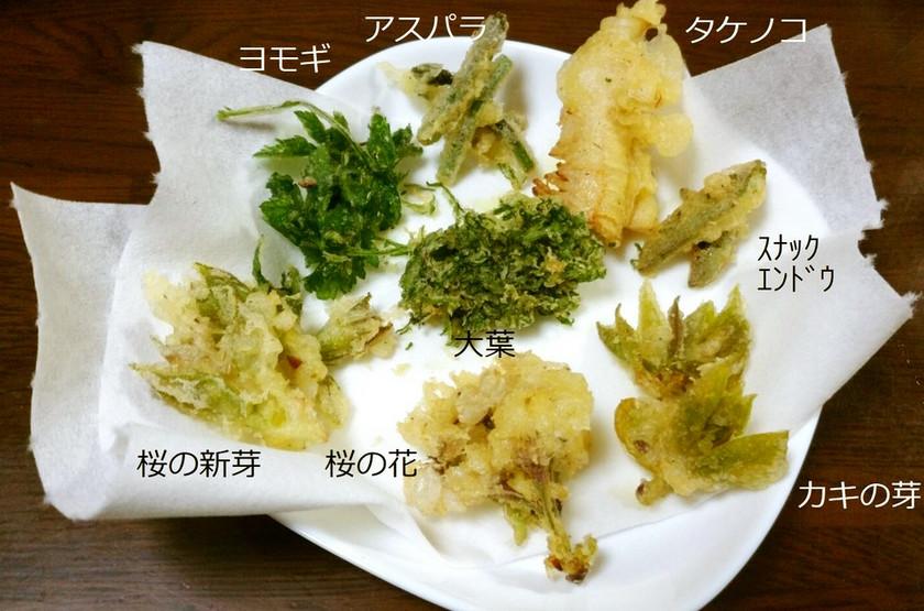 【メモ】春の野草・野菜の天ぷら 追記有