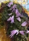 チャイブの花散らし*エディブルフラワー