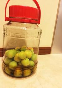 蜂蜜リンゴ酢の梅シロップ