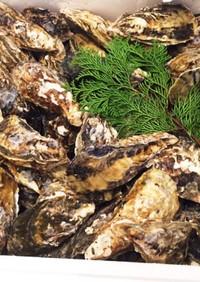 殻付き牡蠣 ホットプレートで酒蒸し