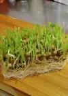食感を楽しむ♫ 豆苗のミモザサラダ風