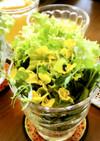 菜の花*の花のサラダ