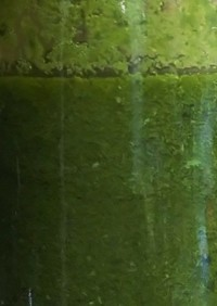 適当!緑茶の茶殻のオイル漬け