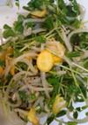 豆苗とモヤシのお助けサラダ