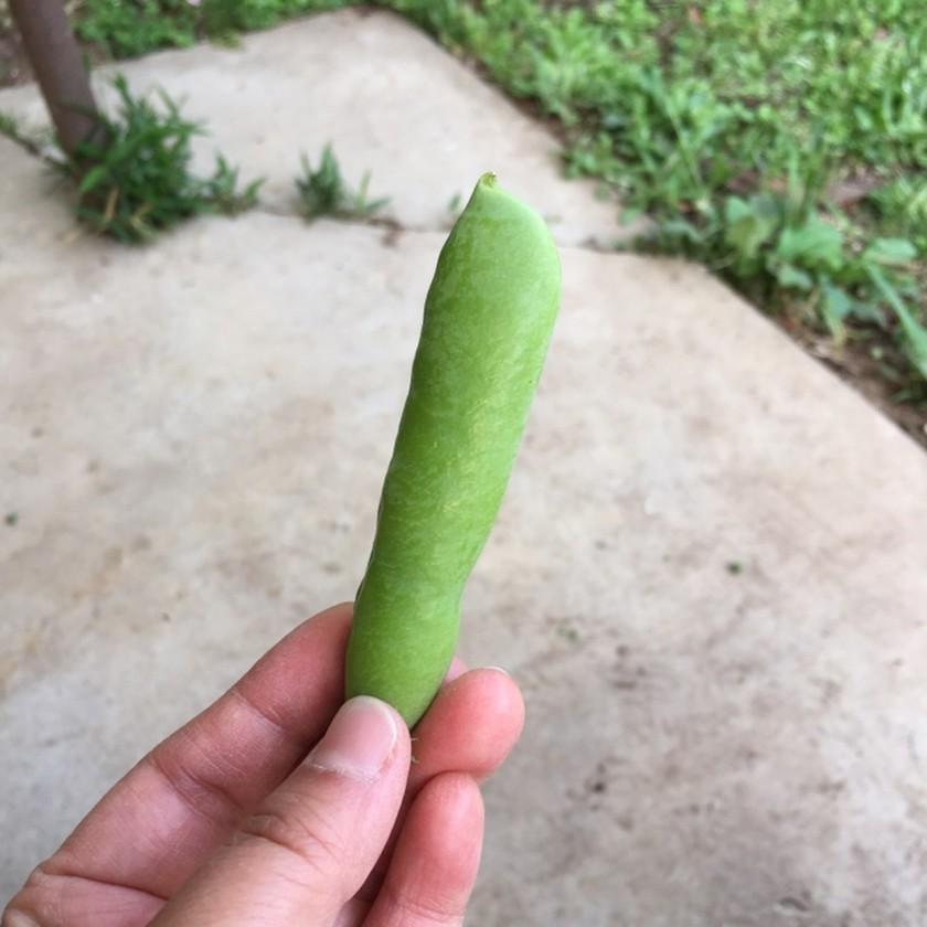 グリーンピースをサヤから取り出す方法