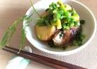 鯖缶とじゃが芋のオイスター煮
