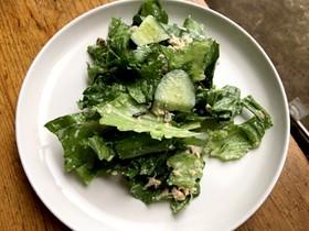 シンプル☆レタスと塩昆布のサラダ